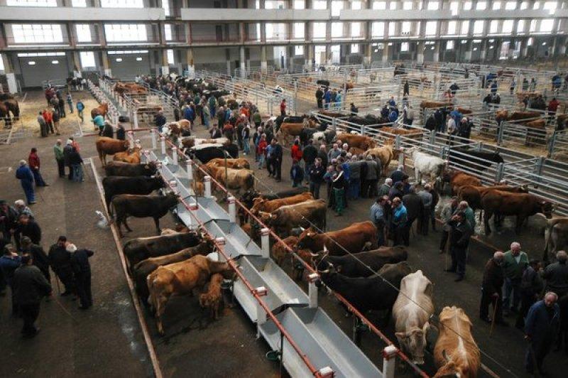 Resultado de imagen de mercado de ganados